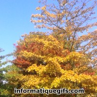 Photo arbre automne