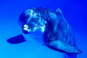 Image dolphin