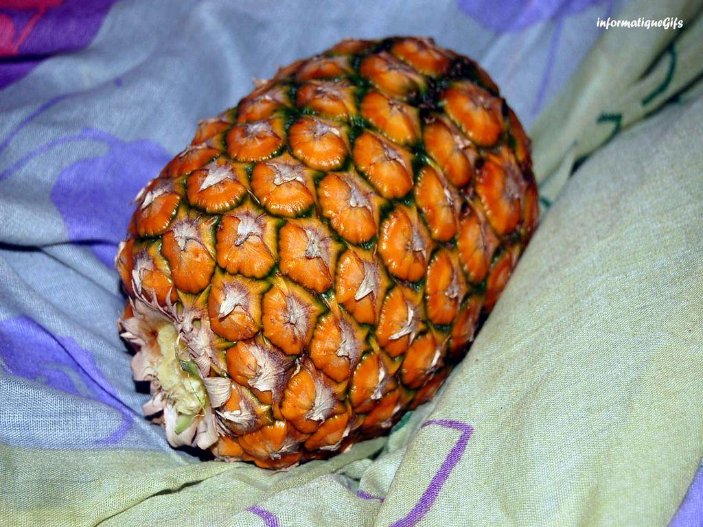 Ananas arbre for Fond ecran ananas
