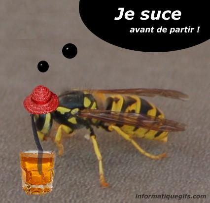 humour-mouche-bizarre