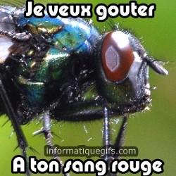 Photo de mouche volante, a quoi sert une mouche humour