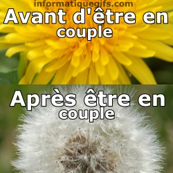 Fleur de pissenlit et aigrette, photo humour comique