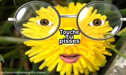 Fleur De Pissenlit Et Aigrette Photo Humour Comique