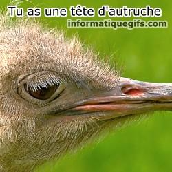 Image oiseau amoureux photos humour couple amoureux - Poids d une autruche ...