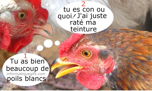 Humour Poule Rousse Et Coloration De Cheveux