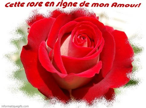 Photo De Rose Rouge Image Rose Amour Et Message